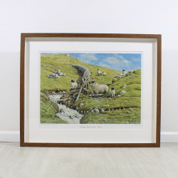 Wrong Side Of Fence Sheep Framed Print