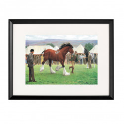 Showday Heavy Horse Framed Print