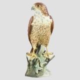 Peregrine Falcon By Kaiser