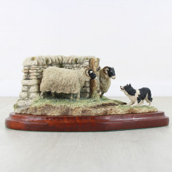 What Now| Swaledale Sheep With Border Collie